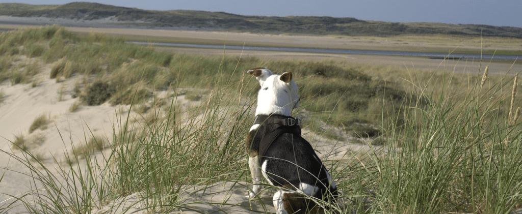 vakantie texel met hond